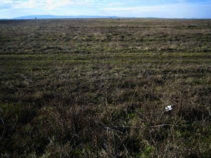 Land in Haskovo region, Svilengrad property for sale Ref. No 2375