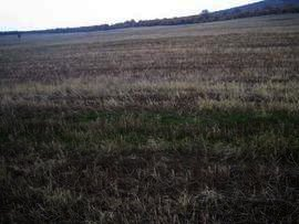 Land in Haskovo Property in Bulgaria Ref. No 2331