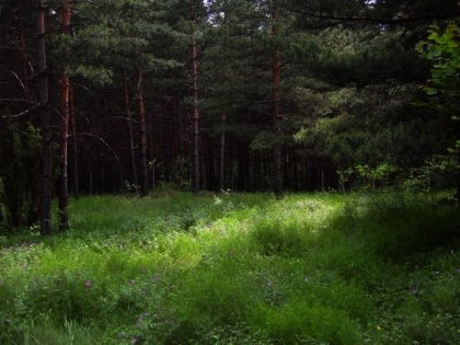 Regulated plot of land near Borovets in Bulgaria Ref. No 8317