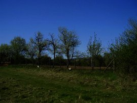 Perfect land for investment in Pleven region Ref. No 5310