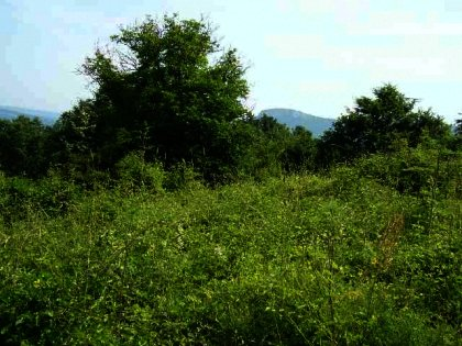 Agricultural land for sale near Gabrovo Ref. No 591063